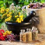 5 erbe medicinali per i vostri balconi