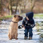 Convivenza sicura tra cani e bimbi